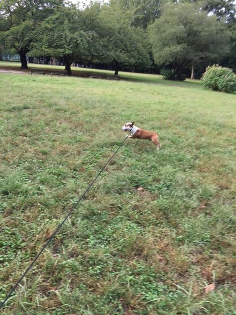 飛び犬_b0349589_18061768.jpg