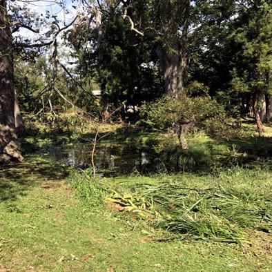 この池はこのままが良い_d0212519_21565613.jpg