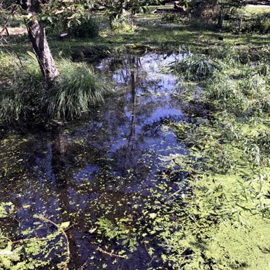 この池はこのままが良い_d0212519_21571062.jpg
