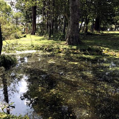 この池はこのままが良い_d0212519_21573231.jpg