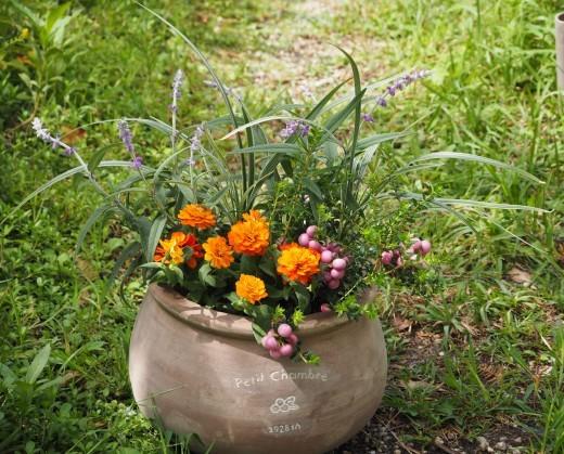 秋のお花を楽しみましょう!_f0139333_00234319.jpg