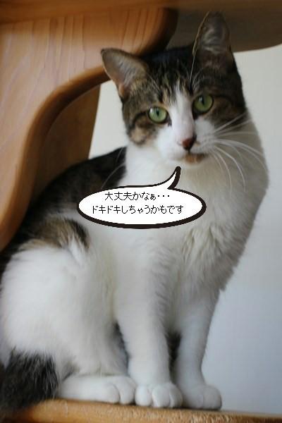 保護猫さん、明日はお見合いです_e0151545_20435060.jpg