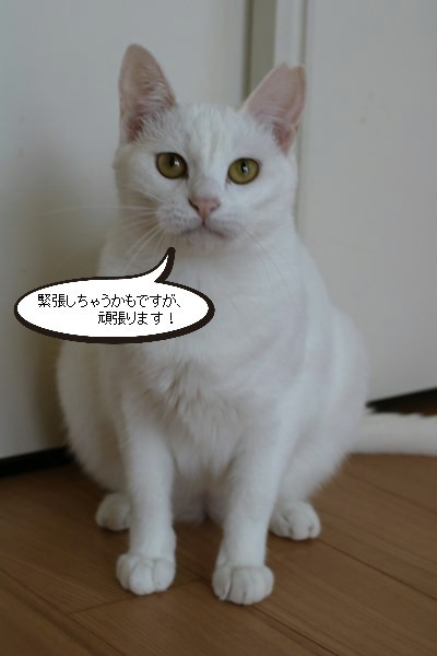 保護猫さん、明日はお見合いです_e0151545_20440323.jpg