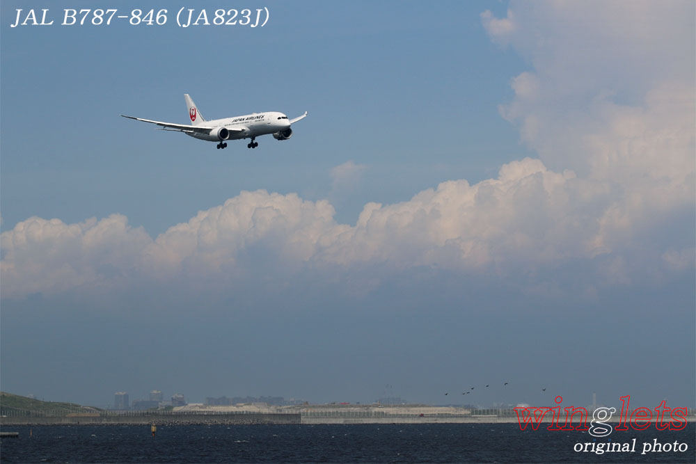 '17年 京浜島・つばさ公園レポート ・・・JAL/JA823J_f0352866_18583235.jpg