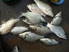 今日もイメージを釣りに 018  ヨコになってタテを思う椅子師_c0121570_12310711.jpg
