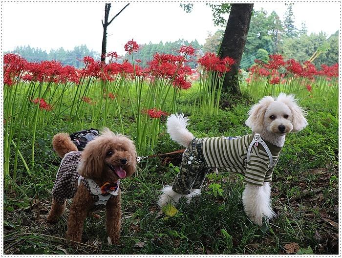 秋分の日のお出掛けの1つは、彼岸花の群生地、竹田の七つ森古墳群へ_b0175688_00232344.jpg