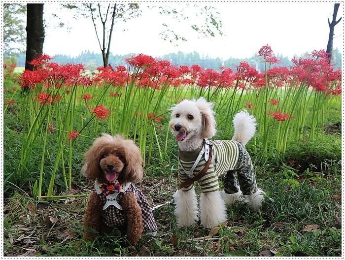 秋分の日のお出掛けの1つは、彼岸花の群生地、竹田の七つ森古墳群へ_b0175688_00234094.jpg