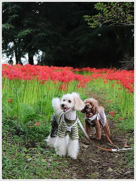 秋分の日のお出掛けの1つは、彼岸花の群生地、竹田の七つ森古墳群へ_b0175688_00234581.jpg