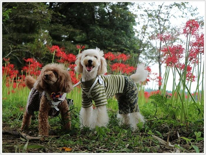 秋分の日のお出掛けの1つは、彼岸花の群生地、竹田の七つ森古墳群へ_b0175688_00270741.jpg