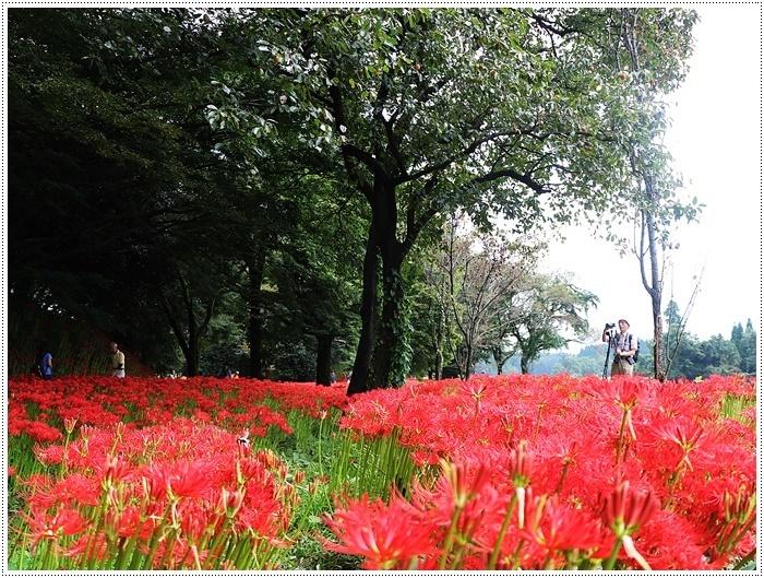 秋分の日のお出掛けの1つは、彼岸花の群生地、竹田の七つ森古墳群へ_b0175688_00281160.jpg