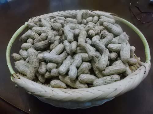 嫁農園の落花生&余った食パンでカレーパン_f0019498_10042025.jpg