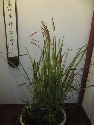 山野草が観られる「芭蕉の館」②_f0289632_17320716.jpg