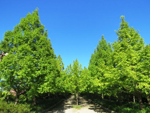 野鳥トレ93 神戸森林植物園_b0227552_19513716.jpg