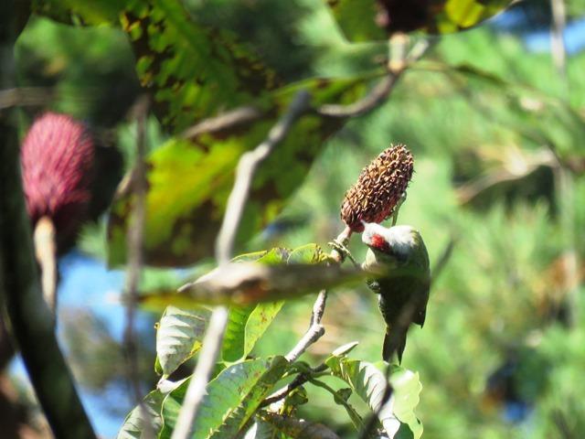 野鳥トレ93 神戸森林植物園_b0227552_19520486.jpg