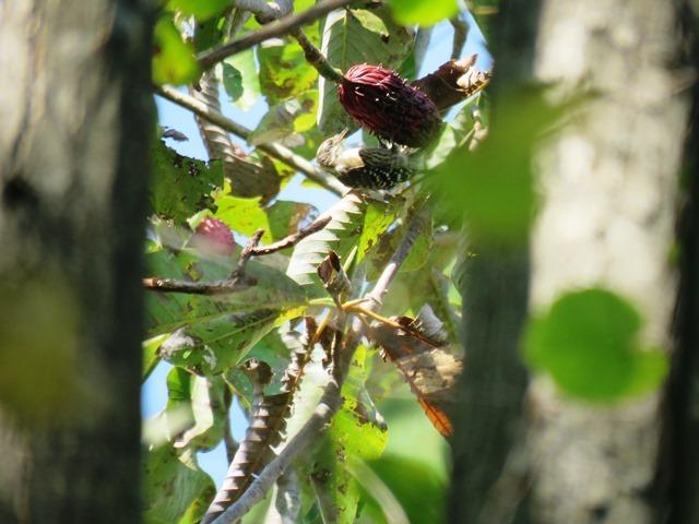 野鳥トレ93 神戸森林植物園_b0227552_19521428.jpg