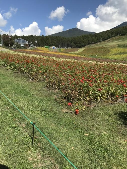 八ヶ岳富士見高原リゾート_f0303858_16485019.jpg