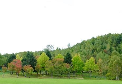 滝野すずらん丘陵公園で「コスモス」を観てきました。_f0362073_06331196.jpg
