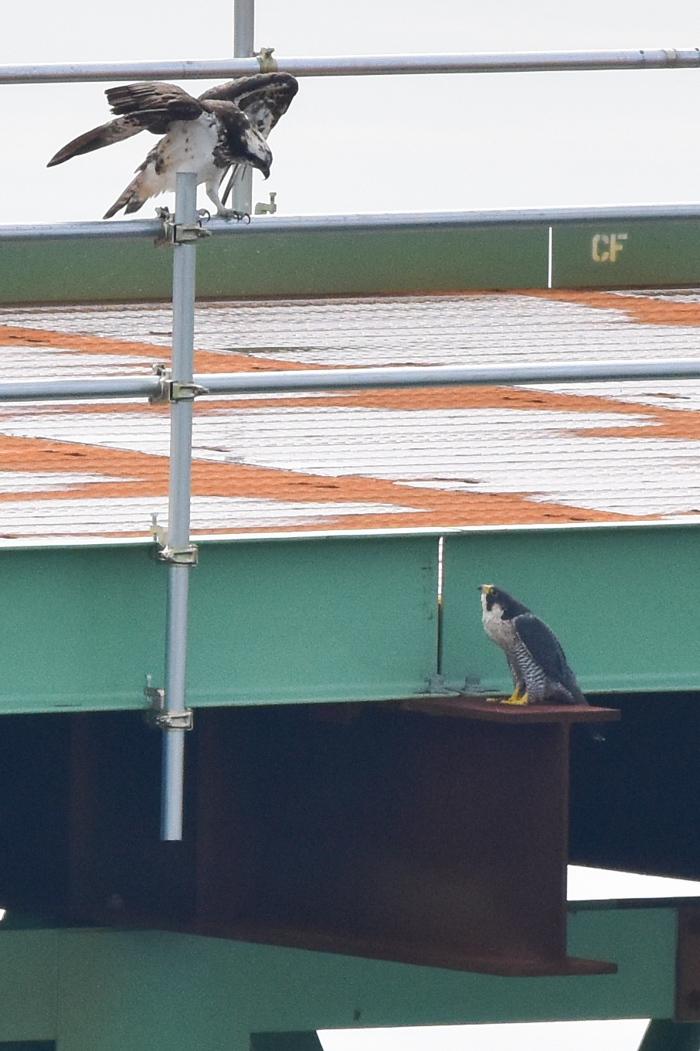 「大きな鳥」劇場w (^o^)_c0049299_18472911.jpg