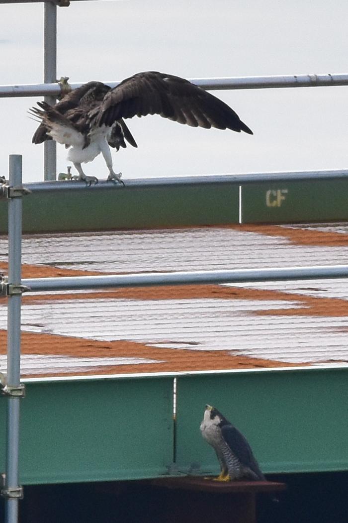 「大きな鳥」劇場w (^o^)_c0049299_19021556.jpg