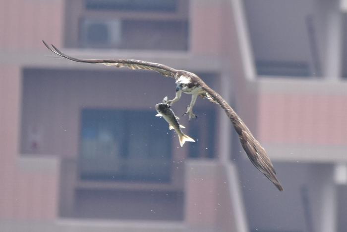 「大きな鳥」劇場w (^o^)_c0049299_19144718.jpg