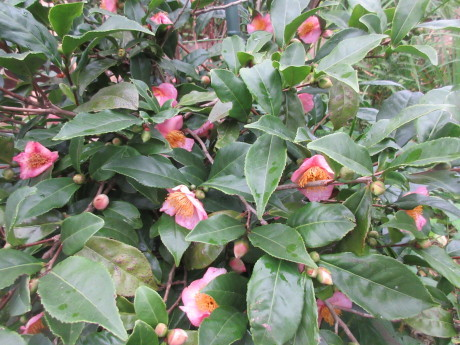 ブルーベリー植え替え・紫蘇の実をもぐ など_a0203003_18394028.jpg