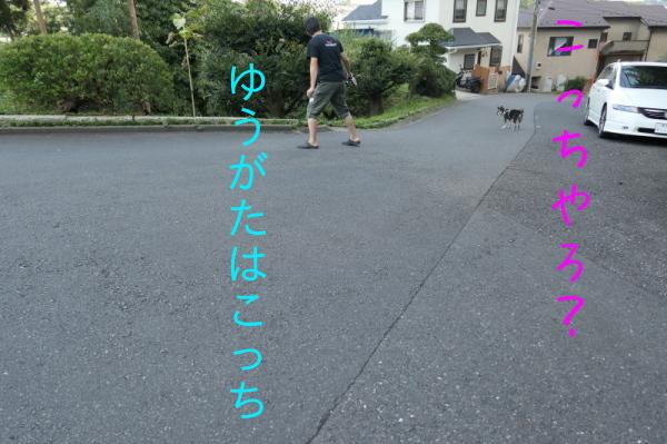 f0369014_15041423.jpg