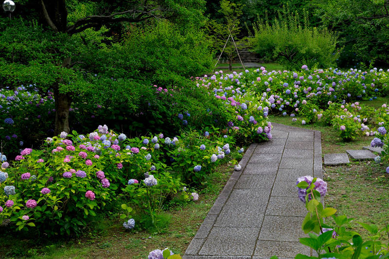 智積院・紫陽花の頃_f0155048_20584021.jpg