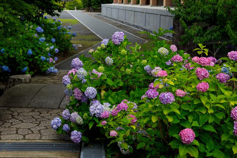智積院・紫陽花の頃_f0155048_20593072.jpg