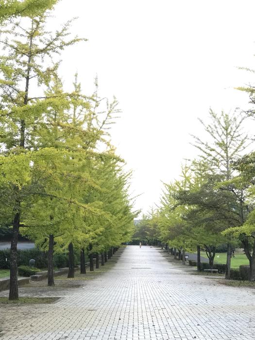 紅葉前のイチョウ並木‼︎_f0194657_17305568.jpg