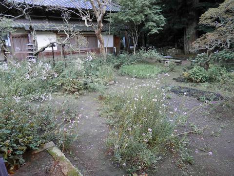 第十二回鎌倉芸術祭(10・6~12・23)OPR、浄智寺で開催_c0014967_20572266.jpg