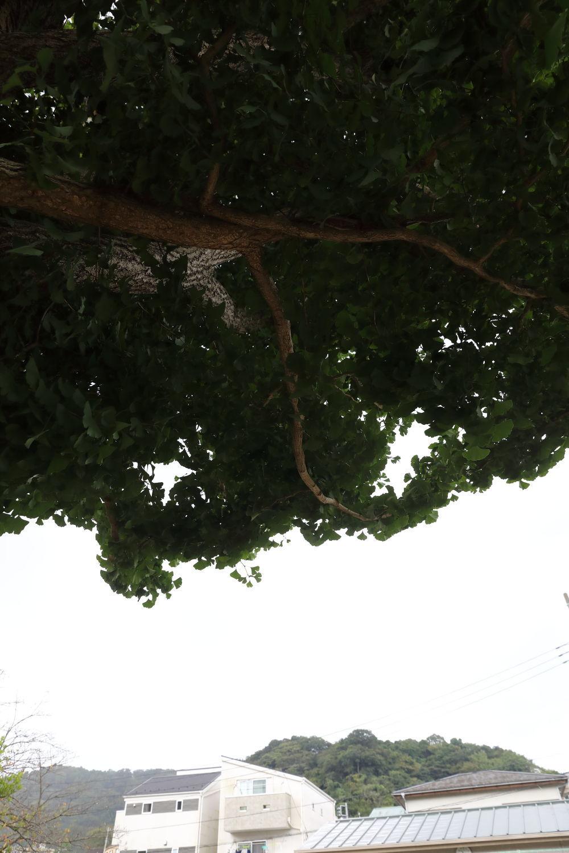 雨宿り♪_b0275998_12441818.jpg