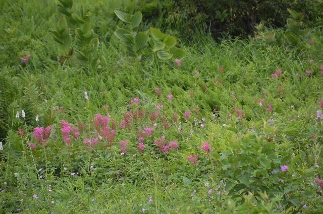 2016年7月28日 八島湿原 ①_c0124100_17163724.jpg