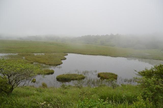 2016年7月28日 八島湿原 ①_c0124100_17170857.jpg