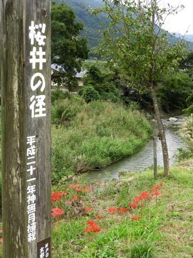 大原の里 秋の盛り_e0048413_21405765.jpg