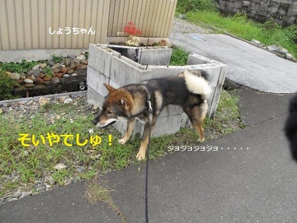 f0143123_20083081.jpg
