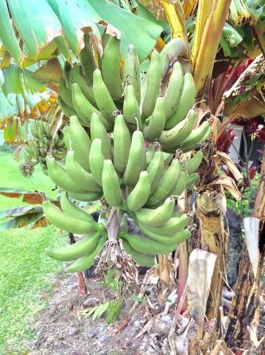 ハワイ島_c0223630_17051903.jpg
