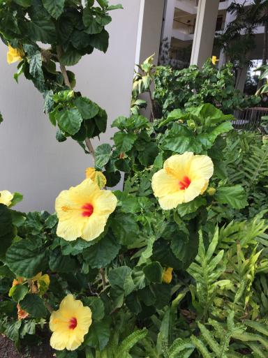 ハワイ島_c0223630_17052006.jpg