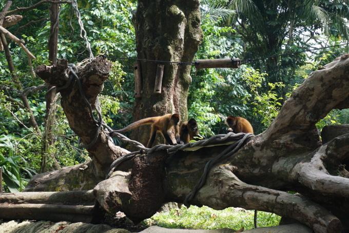 みんな大好きSingapore Zoo_a0318155_15384882.jpg