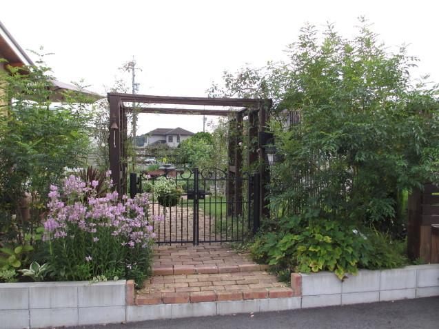 レンガ花壇&ベンチに咲く花は姫小菊とサルビア、ラベンダーはどうしても枯れてしまいます。_a0243064_11182532.jpg