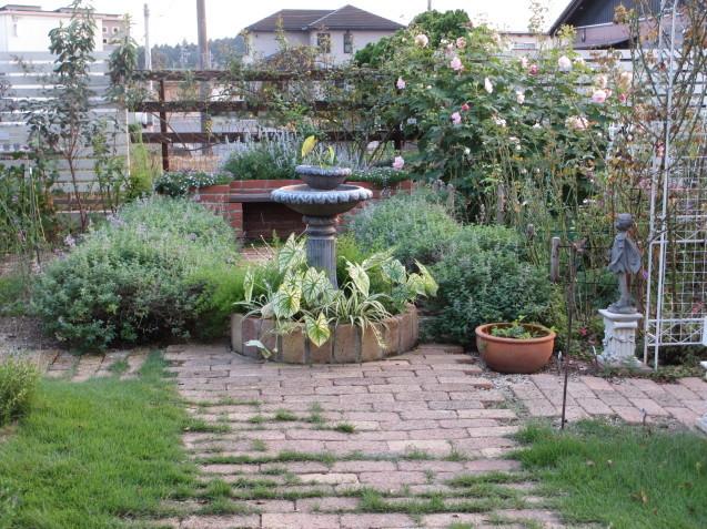 レンガ花壇&ベンチに咲く花は姫小菊とサルビア、ラベンダーはどうしても枯れてしまいます。_a0243064_11190660.jpg