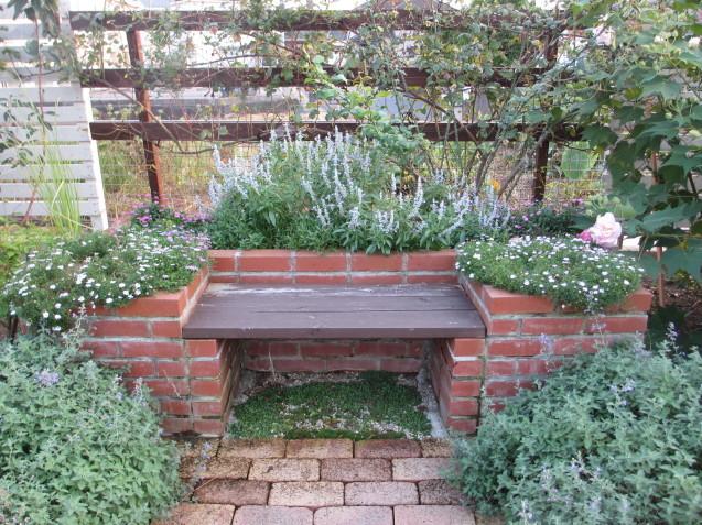 レンガ花壇&ベンチに咲く花は姫小菊とサルビア、ラベンダーはどうしても枯れてしまいます。_a0243064_11200660.jpg