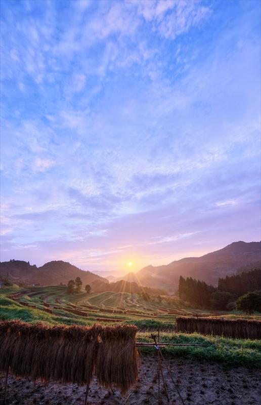 収穫の朝 ~秋の大山千枚田~  3_f0018464_6593115.jpg
