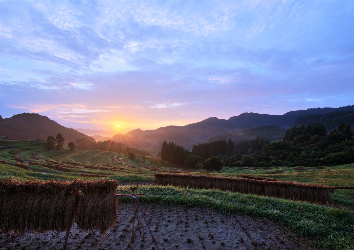 収穫の朝 ~秋の大山千枚田~  3_f0018464_741652.jpg