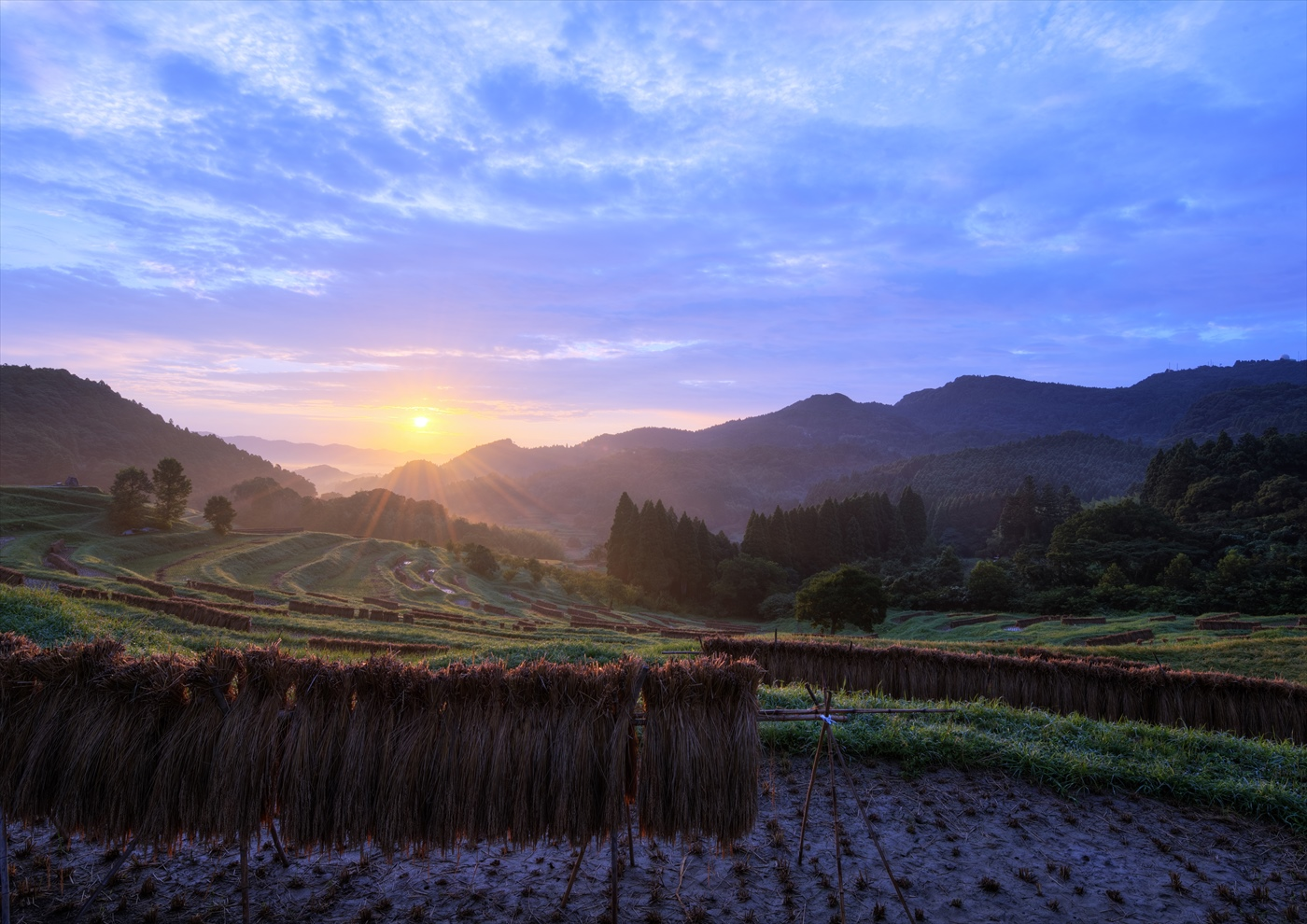 収穫の朝 ~秋の大山千枚田~  3_f0018464_742970.jpg