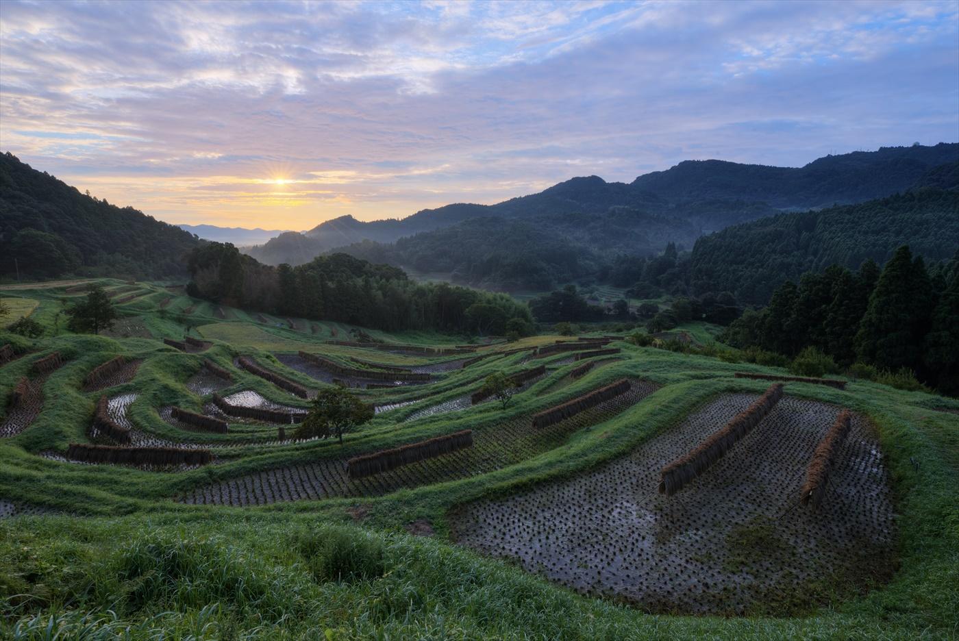収穫の朝 ~秋の大山千枚田~  3_f0018464_74527.jpg