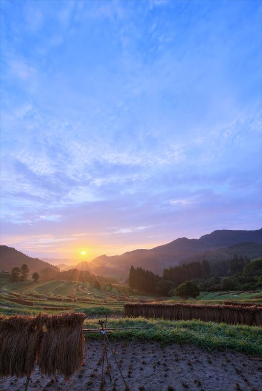 収穫の朝 ~秋の大山千枚田~  3_f0018464_745978.jpg