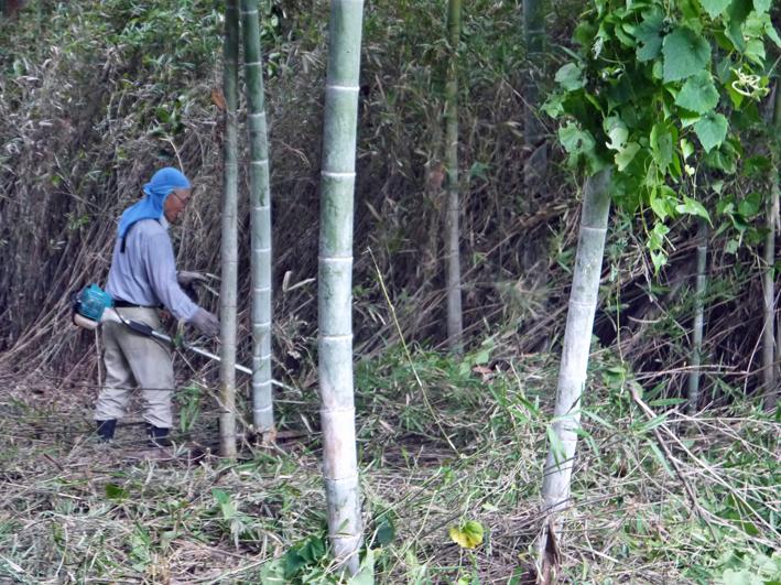 9・20伏尾インストラクターと神奈川県所有の竹林整備②_c0014967_17311984.jpg