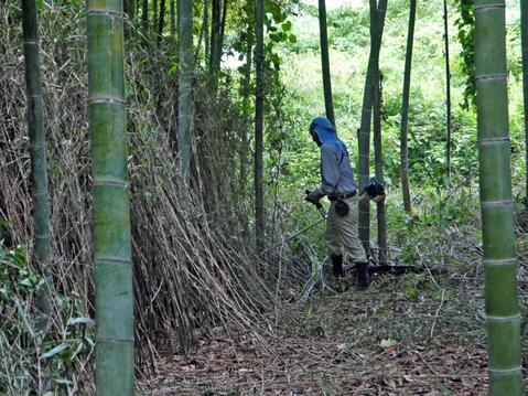 9・20伏尾インストラクターと神奈川県所有の竹林整備②_c0014967_17313477.jpg