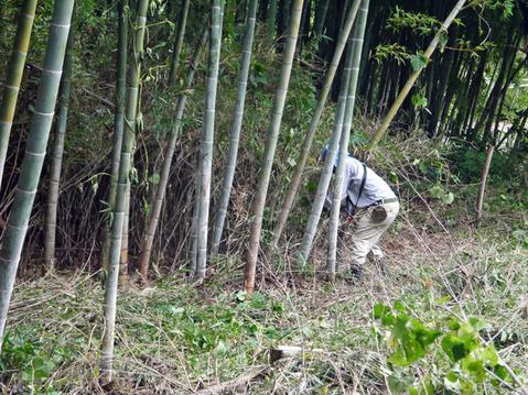 9・20伏尾インストラクターと神奈川県所有の竹林整備②_c0014967_17314558.jpg