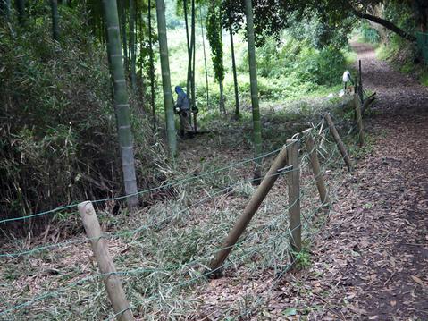 9・20伏尾インストラクターと神奈川県所有の竹林整備②_c0014967_17322423.jpg